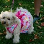 9-28-14 Doggie Jog 1